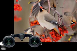 Leica ultravid br kompakte ferngläser lifestyle leisure